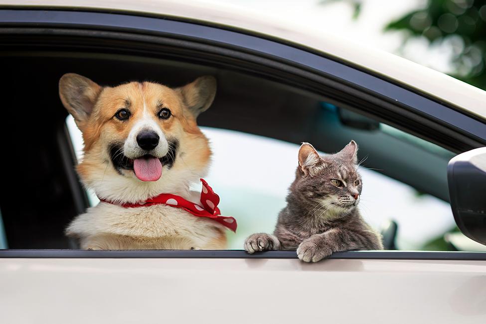 Wie nehme ich mein Haustier sicher im Auto mit?